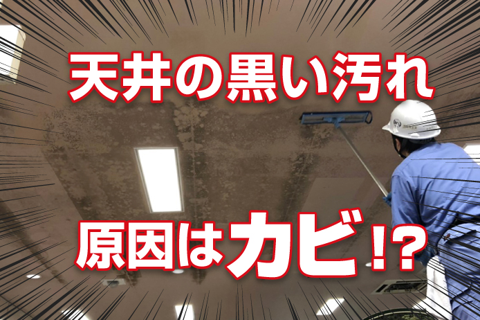 天井の黒い汚れの原因はカビ