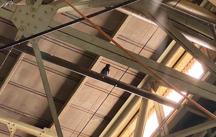 鳩・鳥よけ 工場内のハト